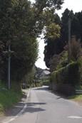 野月舎の前の通りです。